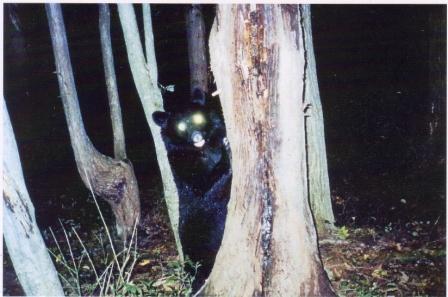 200811夜の森の熊.jpg