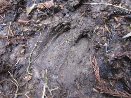 52-IMG_8913鹿の足跡.JPG
