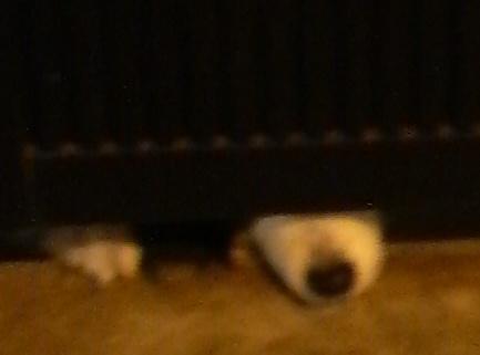 イヌの鼻先P1000243.jpg