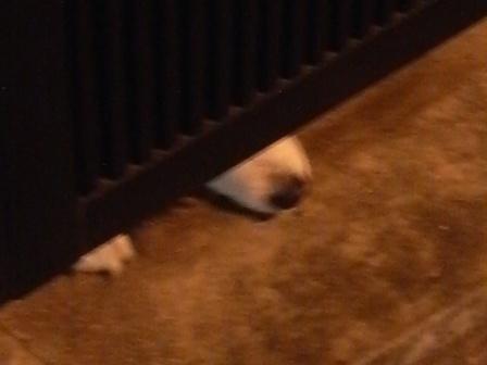 イヌの鼻先P1000244.jpg