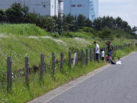 茜浜P6150041.JPG