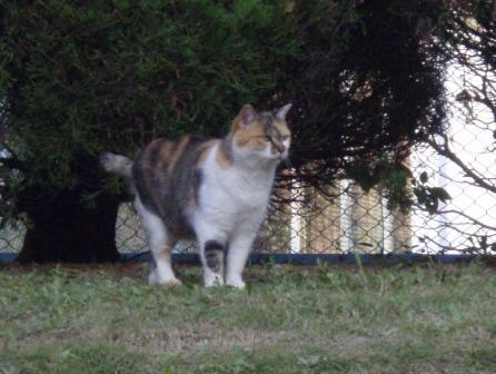 PA040685猫.JPG